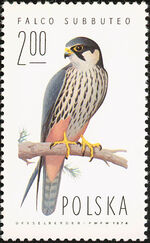 Poland 1975 Falcons e