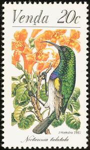 Venda 1981Sunbirds c
