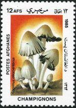 Afghanistan 1985 Mushrooms e