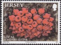 Jersey 2011 Jersey Marine Life IX - Sea Squirts and Sponges a