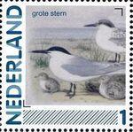 Netherlands 2011 Birds in Netherlands a21