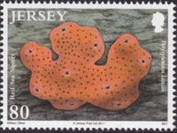 Jersey 2011 Jersey Marine Life IX - Sea Squirts and Sponges f