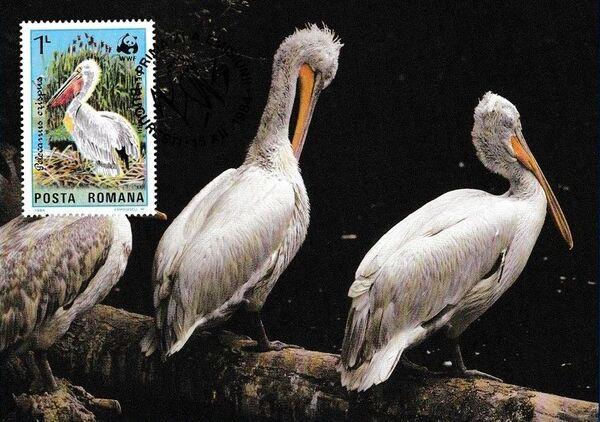 Romania 1984 WWF - Pelicans of the Danube Delta MCb
