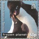 British Antarctic Territory 2011 Frozen Planet - Penguins d