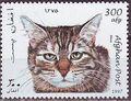Afghanistan 1997 Cats e.jpg