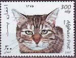 Afghanistan 1997 Cats e