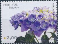 Madeira 2006 Madeira Flowers f