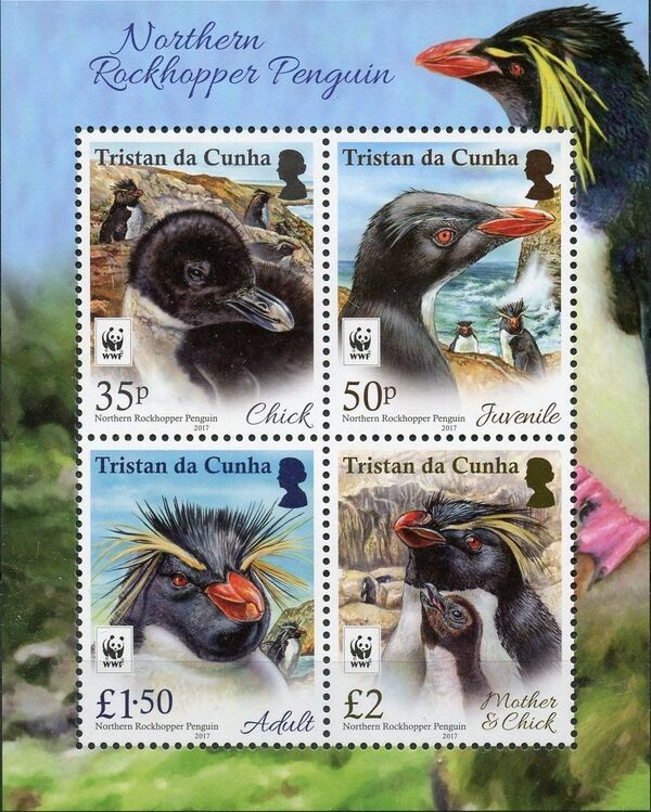 Tristan da Cunha 2017 WWF - Northern Rockhopper Penguin SSa