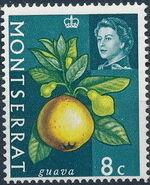 Montserrat 1965 Fruit & Vegetables and Portrait of Queen Elizabeth II g