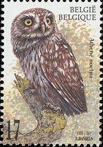Belgium 1999 Owls b