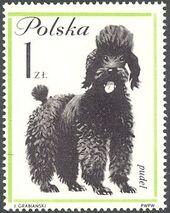Poland 1963 Dogs f
