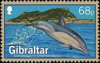 Gibraltar 2014 Dolphins a