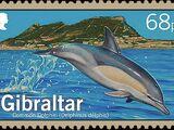 Gibraltar 2014 Dolphins
