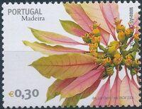 Madeira 2006 Madeira Flowers a