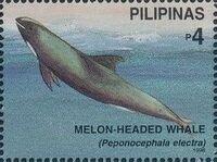 Philippines 1998 Marine Mammals Found in Philipines Waters d