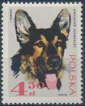 Poland 1969 Dogs g