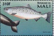 Mali 1997 Marine Life zg