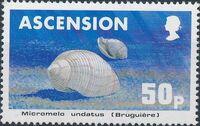 Ascension 1983 Sea Shells e