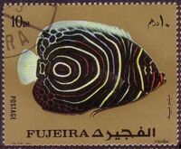 Fujeira 1972 Exotic Fishes a