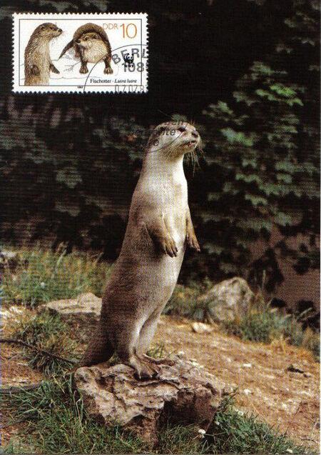Germany DDR 1987 WWF - European Otter o