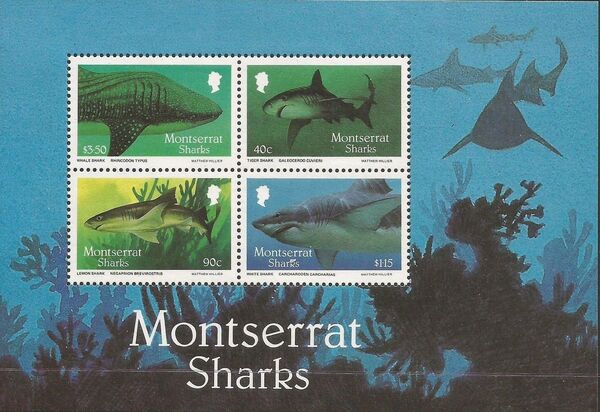 Montserrat 1987 Sharks h