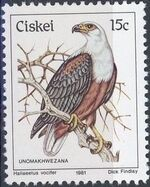 Ciskei 1981 Definitive - Birds k