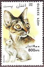 Afghanistan 1996 Cats d