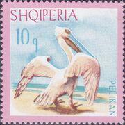 Albania 1967 Dalmatian Pelican a