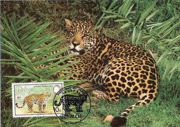 Belize 1983 WWF - Jaguar MCb