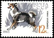 Soviet Union (USSR) 1965 Hunting and Service Dogs i