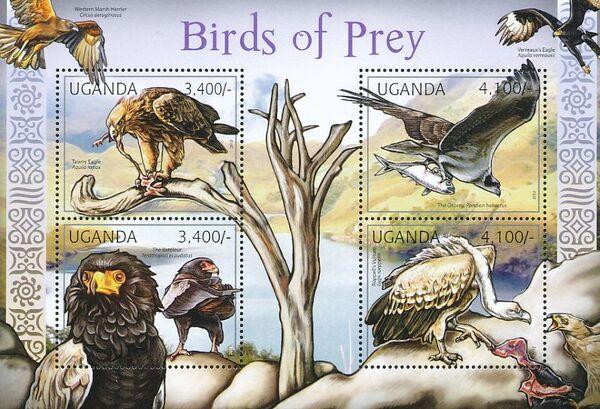 Uganda 2012 Fauna of African Great Lakes Region - Birds of Prey - Western Marsh Harrier f