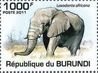 Burundi 2011 Elephants of the African Savanna b