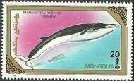 Mongolia 1990 Marine Mammals a