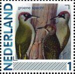 Netherlands 2011 Birds in Netherlands a16