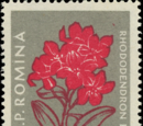 Romania 1957 Carpathian Mountain Flowers