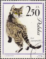 Poland 1964 European Cats h
