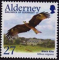 Alderney 2002 Migrating Birds Part 1 Raptors b