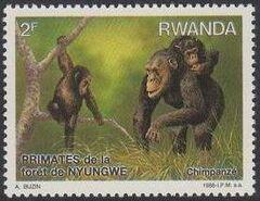 Rwanda 1988 Primates of Nyungwe Forest a