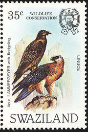 Swaziland 1983 WWF Bearded Vulture a