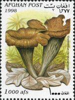 Afghanistan 1998 Mushrooms d