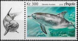 Angola 2018 Wildlife of Angola - Dolphins b
