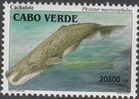 Cape Verde 2003 Whales b