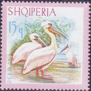 Albania 1967 Dalmatian Pelican b