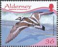 Alderney 2009 Resident Birds Part 4 (Waders) a.jpg