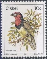 Ciskei 1981 Definitive - Birds j