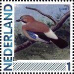 Netherlands 2011 Birds in Netherlands a13
