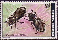 Rwanda 1978 Beetles b