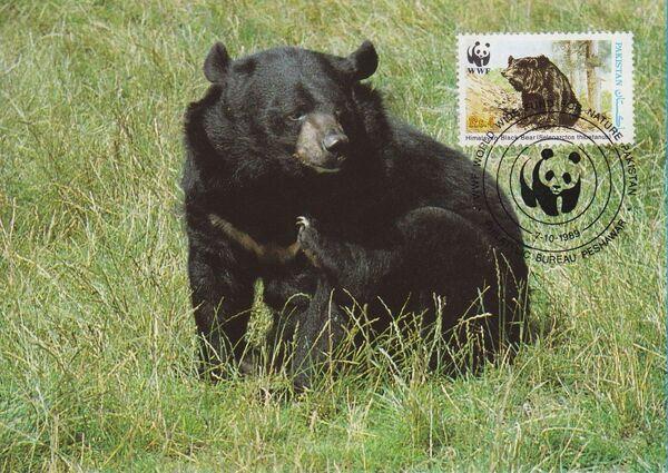 Pakistan 1989 WWF Asiatic Black Bear MCd