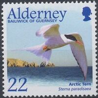 Alderney 2003 Migrating Birds Part 2 Seabirds a