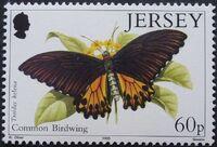 Jersey 1995 Butterflies e